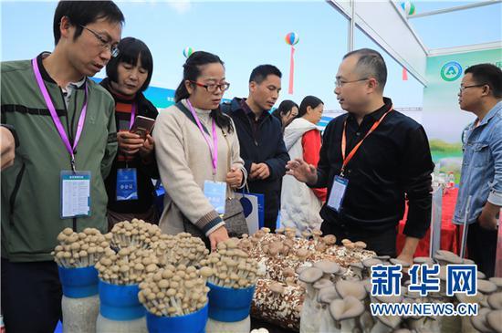 11月15日,2019中国•贵州食用菌产业发展大会与会人员在展示会现场进行商务交流。新华网 卢志佳 摄