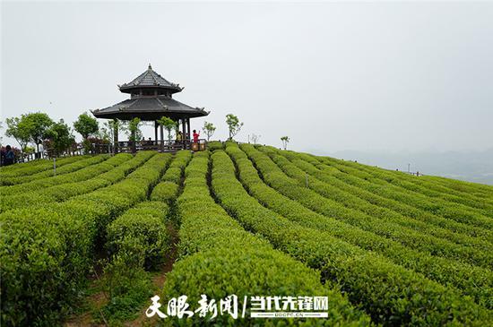 久安乡九龙山茶场