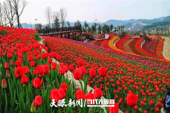 5月羊昌花画小镇文明实践基地鲜花怒放