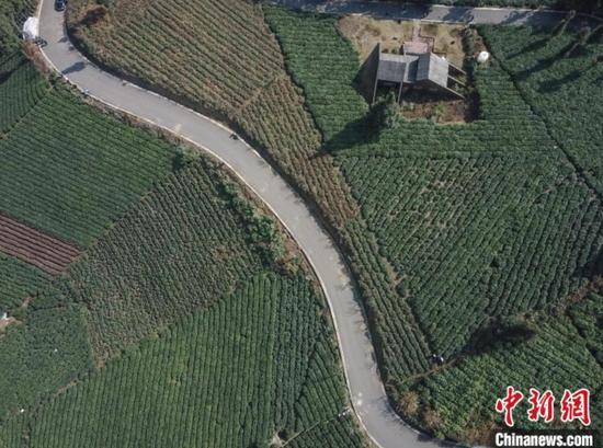 资料图:贵州茶园。瞿宏伦 摄