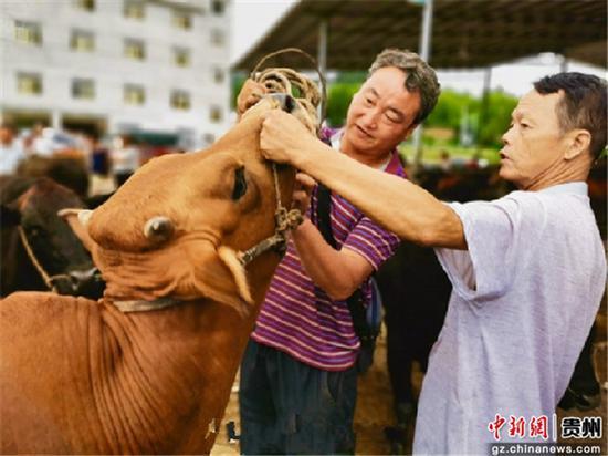 德江县复兴镇黔东北畜禽交易中心交易现场。德江县融媒体中心供图