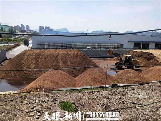 贵州金蟾大山公司的标准化食用菌菌棒生产厂一角 (江婵 摄)