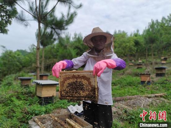 常住在贵州省安顺市紫云苗族布依族自治县浪风关国有林场养蜂的陈昌权。 刘美伶 摄
