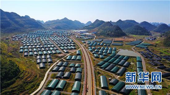 11月15日航拍的贵州安龙县食用菌基地。新华网 卢志佳 摄