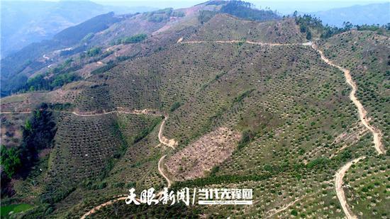 望谟县油迈瑶族乡巧路村300亩芒果示范基地