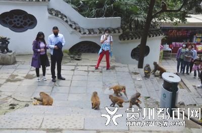 游客和猕猴保持一定的距离。