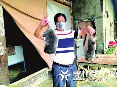 息烽县小寨坝镇特种养殖户展示养殖的竹鼠。