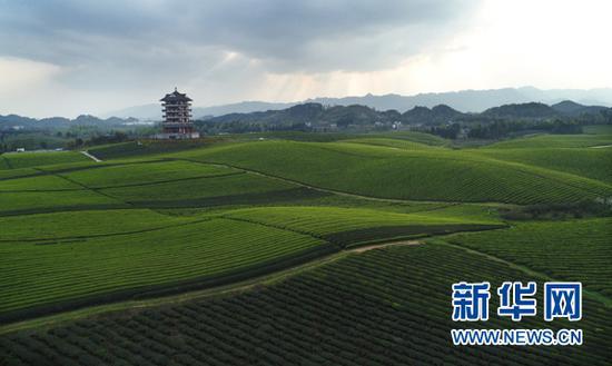 贵州遵义湄潭茶海景区风光。新华网 卢志佳 摄