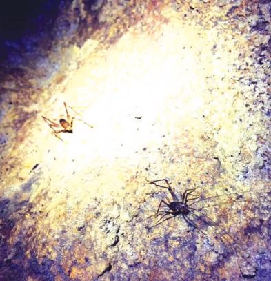 """洞内发现的""""蟋蟀""""。"""