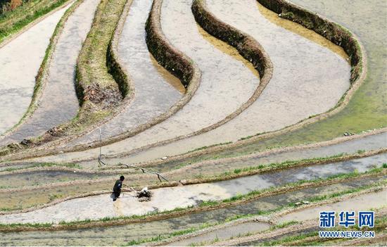 3月31日,贵州省从江县加勉乡羊达村农民用微耕机耕田。新华社记者 杨文斌 摄