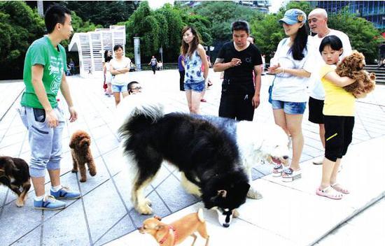 不少市民有养大型犬的习惯。