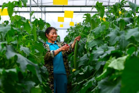《【星图娱乐客户端登录】铜仁万山:高效农业让我们走上小康路》