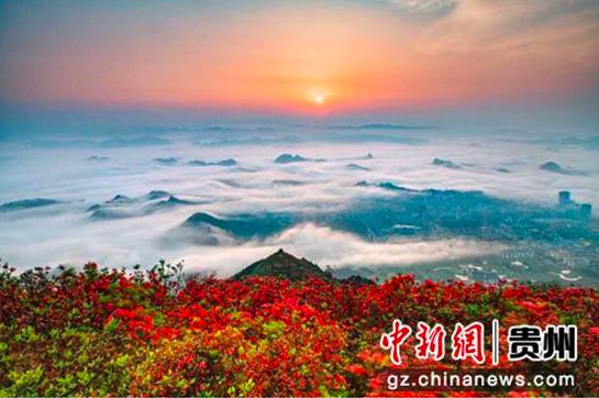 贵州丹寨杜鹃花节启幕