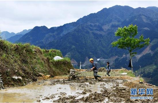 3月31日,贵州省从江县加勉乡白棒村农民用微耕机耕田。新华社记者 杨文斌 摄