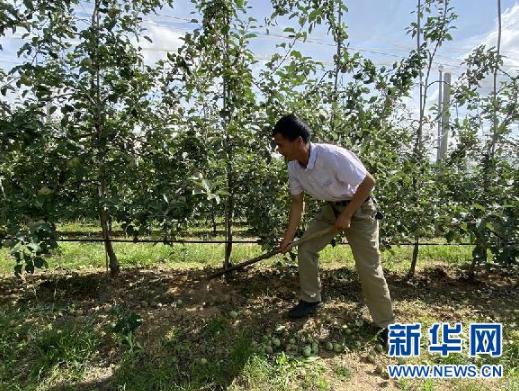 一名村民正在给苹果树松土(6月17日摄)。新华社记者 向定杰 摄