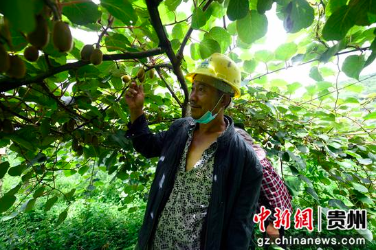 贵州息烽:矿井水浇出一片绿