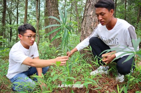 陆国龙、周进给记者介绍种植的中药材品种(黄瑶 摄)