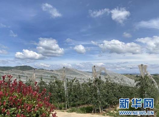 这是6月17日拍摄的迤那镇中海村的苹果基地。新华社记者 向定杰 摄