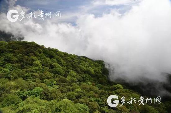 梵净山:绿色的世界(多彩贵州网杨昌鼎 摄)