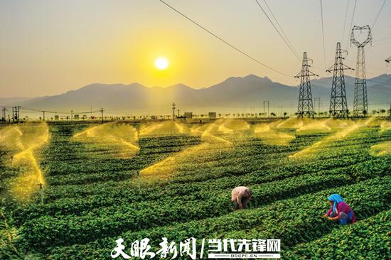 贵州蔬菜基地 吴德昌 摄