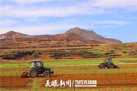 毕节市威宁县草海镇中海社区的5000亩蔬菜基地。为保障今春蔬菜种植用地,数台耕地机正来回轰鸣翻耕土地。(李岗 摄)