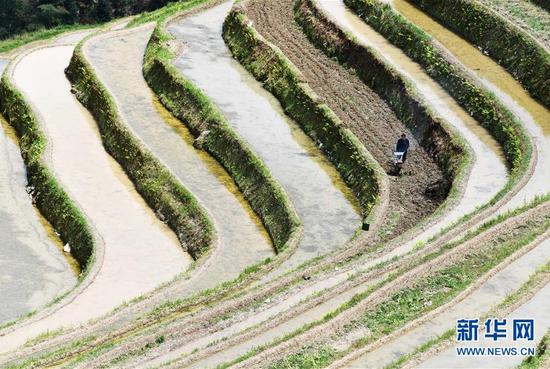 3月31日,贵州省从江县加勉乡羊达村农民用微耕机耕田。