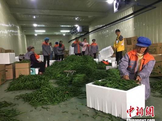 图为村民在冷库中包装辣椒。刘鹏 摄