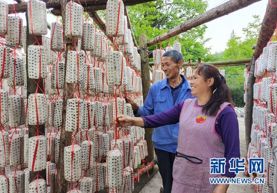 村民陶家友(左)和妻子在看护菌棒。 向定杰 摄