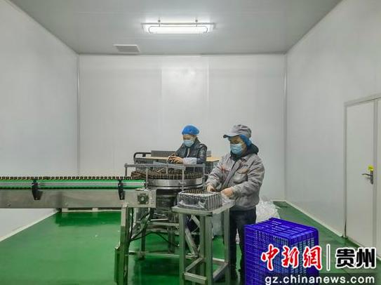"""贵州毕节七星关区:长在深山的野果子成了畅销市场的""""黄金液"""