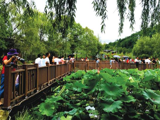 荷塘景色吸引游客。