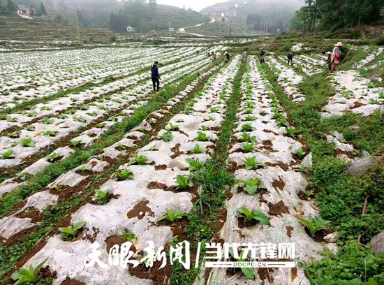纳雍县民建村:观念一变天地宽 百业兴旺致富忙