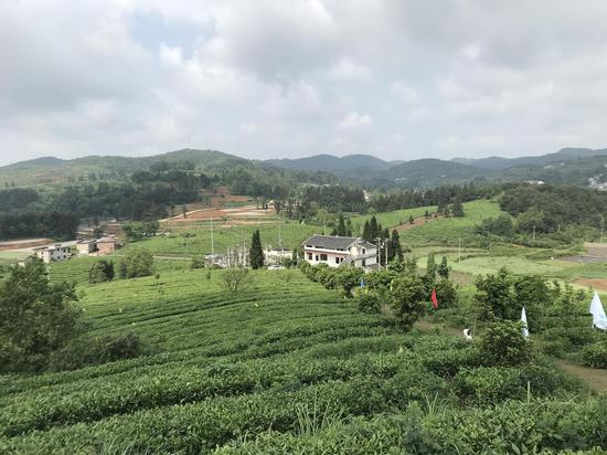 贵州峰园茶业有限公司茶园