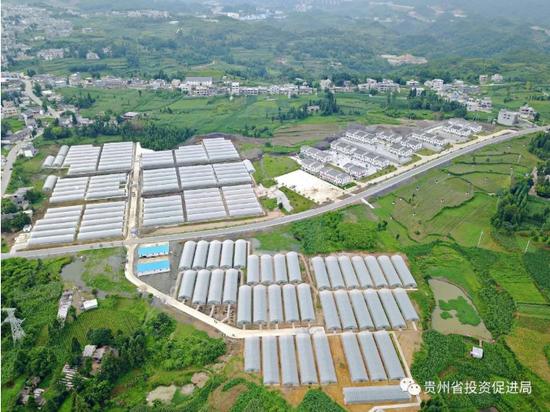 毕节市现代化蔬菜生产基地(毕节市扶贫办供图)