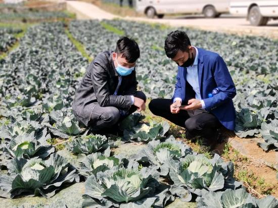 参加产销对接会的客商查看蔬菜生长情况