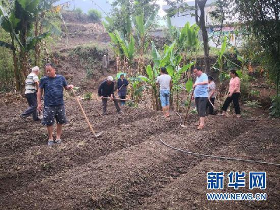 张俊和村民一起种万寿菊。新华网发(受访者供图)