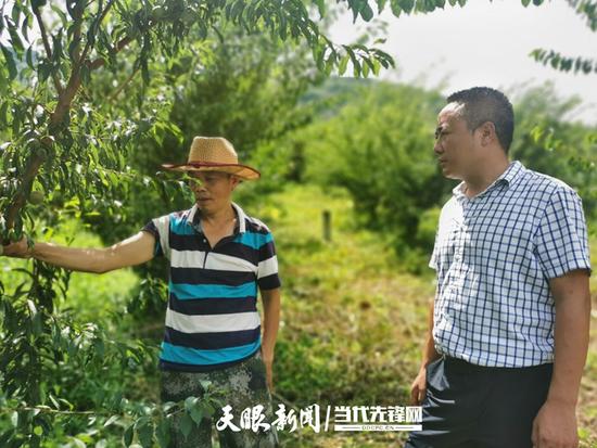 联合社区村民向吴世渊介绍今年的李子销售情况
