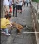 贵阳小女孩拿食物喂食,被猕猴咬伤
