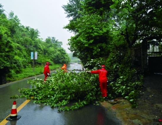 图为6月11日,贵阳公路管理局二甫养护站职工在清理倒伏的行道树。