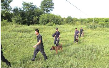 民警带着警犬进行地面搜索