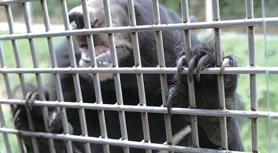 记者体验贵州野生动物园猛兽区