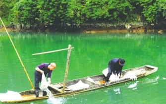 10万鱼苗投放龙江河