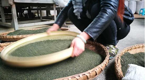 制作好的茶叶再经工人层层筛选,最终才获得沉浸于杯的成品
