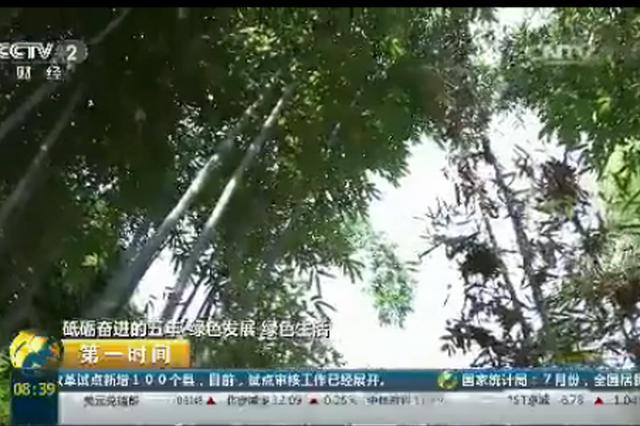 绿色生活:贵州赤水退耕还竹 实现绿色发展