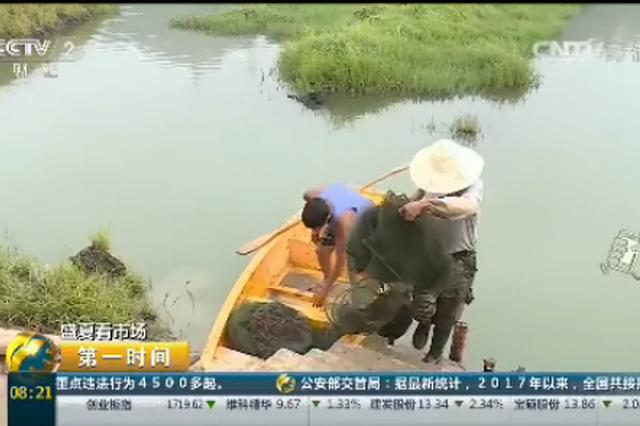 """贵州安顺:小龙虾价格""""走高"""" 助力地方脱贫"""
