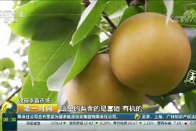 贵州福泉:万亩金谷福梨喜获丰收
