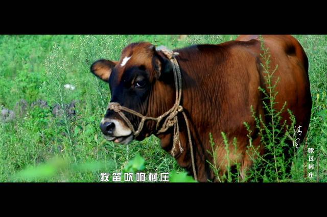 2017中国牛业发展大会主题曲 《清风吹过村庄》发布