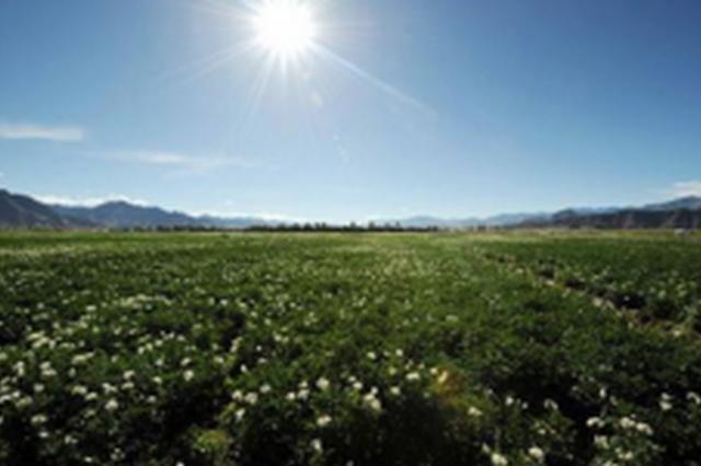 贵州马铃薯种植面积全国排前三