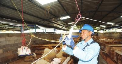 韦成刚义务帮助养殖场检查维护用电设施。