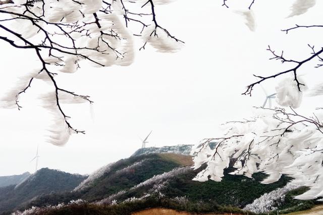 好美!都匀螺丝壳 雾凇雪景