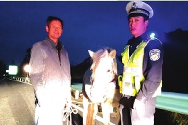 黔东南:马儿误闯高速 交警迅速出警排除险情